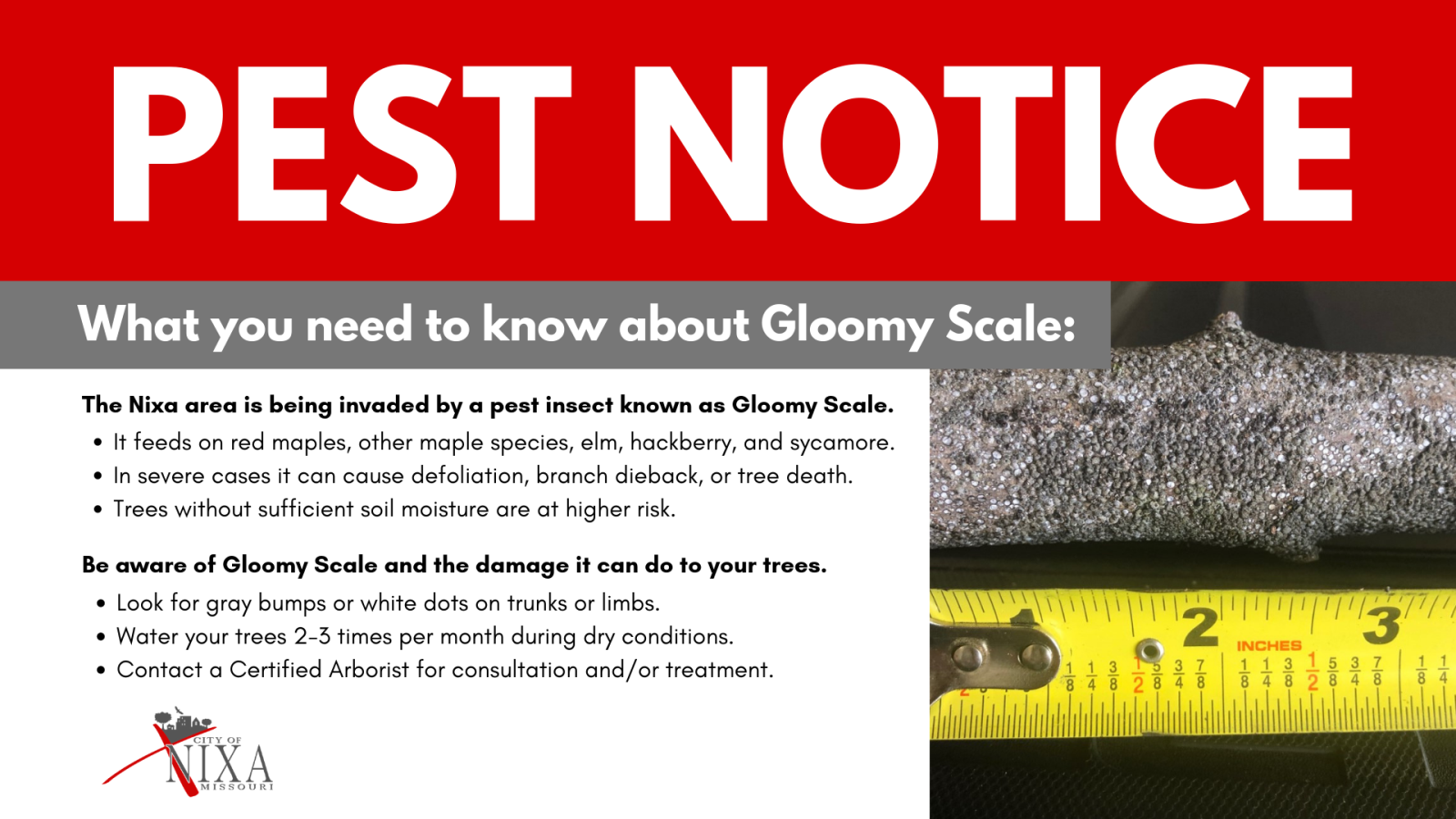 Gloomy Scale Pest Notice_16x9